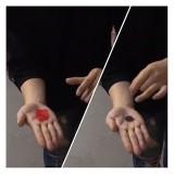 Un pétale de rose se transforme en une pièce de monnaie